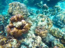 The abundant of shallow coral reefs in the Southern of Thailand, Royalty Free Stock Photography