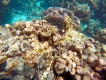 The abundant of shallow coral reefs in the Southern of Thailand, Royalty Free Stock Photo