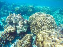The abundant of shallow coral reefs in the Southern of Thailand, Stock Images
