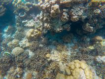 The abundant of shallow coral reefs in the Southern of Thailand, Stock Photo