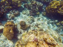 The abundant of shallow coral reefs in the Southern of Thailand, Royalty Free Stock Images