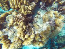 The abundant of shallow coral reefs in the Southern of Thailand, Royalty Free Stock Image