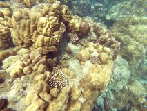 The abundant of shallow coral reefs in the Southern of Thailand, where is home to many small colorful fishes and marine animals. royalty free stock photo