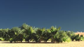 Rich tropical greenery on wasteland in the evening, 3d rendering Stock Photo
