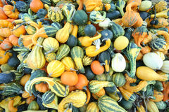 Abundant variety of gourds. A huge variety of colorful Autumn farm fresh gourds Royalty Free Stock Images