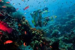 Abundante no mar do Indonesian dos peixes fotos de stock royalty free