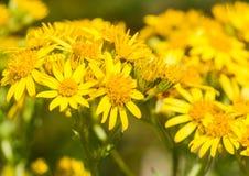 Abundantly Yellow Stock Photos