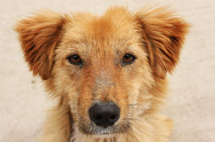 Abused stray dog royalty free stock photo