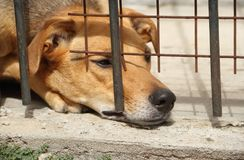 Abuso animal imagens de stock royalty free
