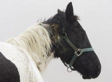 Abuso animale Fotografie Stock Libere da Diritti