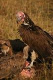 Abutres em uma matança Fotografia de Stock Royalty Free