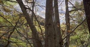 Abwärtstendenz mit Kran nahe Stämmen von Bäumen stock video
