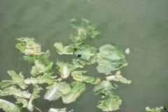 Abwasser der Umweltverschmutzung Stockbild