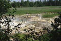 Abwasser entladen in den Teich Die Zerstörung der Natur Die Gesundheit und das reine Wasser Stockbilder