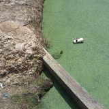 Abwasser-Schildkröte Lizenzfreie Stockfotos