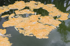 Abwasser, Verschmutzung Lizenzfreies Stockfoto
