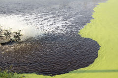 Abwasserbehandlung unter Verwendung der Entengrütze Lizenzfreie Stockfotografie