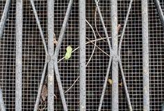 Abwasserkanal/Belüftungsgitter mit Blättern und Stöcken Lizenzfreies Stockfoto