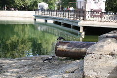 Abwasserkanal vor dem hintergrund des Sees Stockfotos