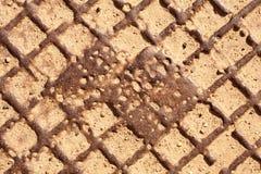 Abwasserkanaleinsteigelochabdeckungbeschaffenheit Stockbild