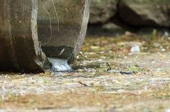 Abwasserleitung Stockbild