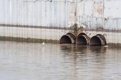 Abwasserleitungen gossen Schmutzwasser im Reservoir, eine Seemöwe, die um Rohre sitzt Lizenzfreies Stockbild