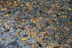 AbwasserWasserverschmutzungsabfall Stockbilder