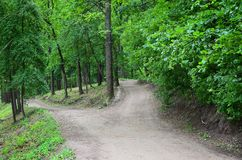 Abweichung von Wegen in den Waldkreuzungen unter vielen Baum Lizenzfreie Stockfotos