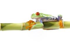 żaby bambusowy obsiadanie Zdjęcie Stock
