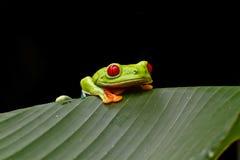 żaby ciekawy drzewo Fotografia Stock