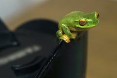 żaby drzewo zdjęcia royalty free