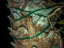 żaby na drzewie fotografia stock