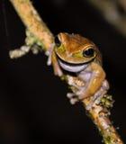 żaby spojrzenia s drzewo Obraz Royalty Free