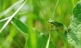 żaby trawy drzewo zdjęcie royalty free