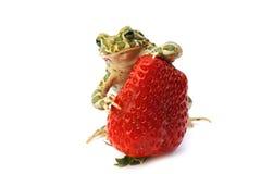 żaby truskawka Fotografia Royalty Free