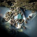 Żaby w Podeszczowej rynnie obrazy stock
