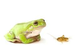 żaby zielone drzewa Fotografia Royalty Free