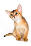 abyssinian γατάκι Στοκ εικόνες με δικαίωμα ελεύθερης χρήσης