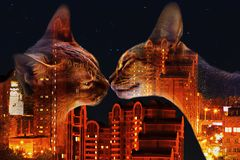 Abyssinian cat on the background of night city, double exposure royalty free stock photos