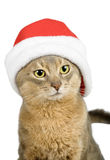 Abyssinian cat in Santa Claus hat stock photo