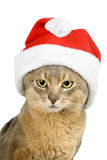 Abyssinian cat in Santa's hat isolated on white royalty free stock images