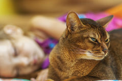 Abyssinian cat and small girl Stock Images