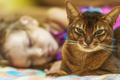 Abyssinian cat and small girl Stock Photos