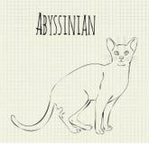 Abyssinian de tiragem do vetor Foto de Stock
