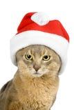 abyssinian isolerad s santa white för katt hatt Royaltyfria Bilder