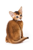 Abyssinian kitten. On white background Stock Photo