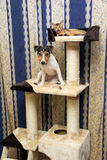 Abyssinian kitten and Jack Russell terrier on cat Climbing frame Stock Image