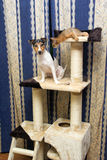 Abyssinian kitten and Jack Russell terrier on cat Climbing frame Stock Photos