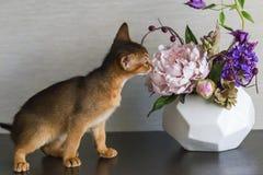 Abyssinian röd katt med vasen royaltyfri fotografi