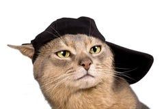 Abyssinische Katze in der Baseballmütze Lizenzfreie Stockbilder